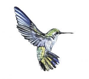 update hummingbird